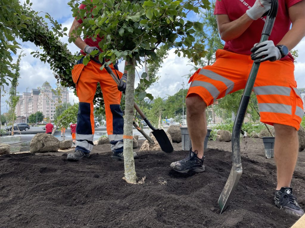planting trees Oslo